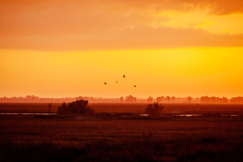 Birds flyring over a landscape in red/yellowish colours. Photo.