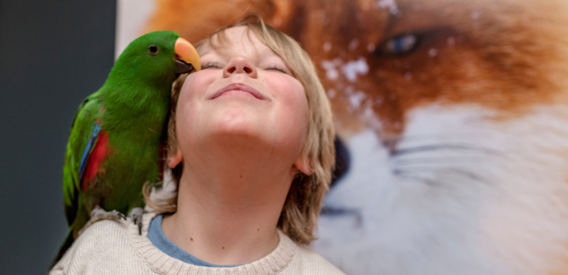 A young boy with a parrot on his shoulder, standing in front of a large image of a fox. Photo.
