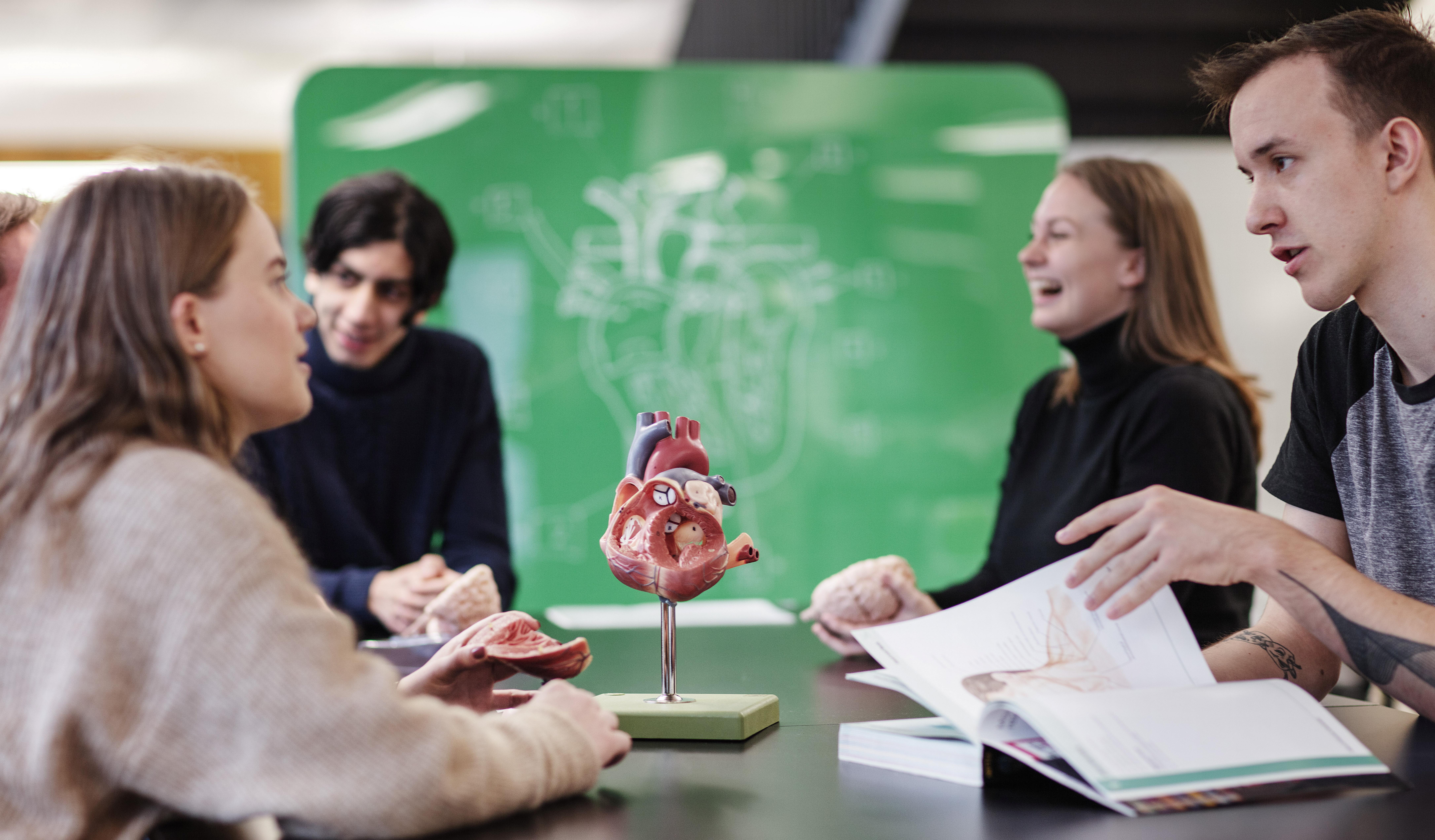 Studenter med anatomisk modell av hjerte